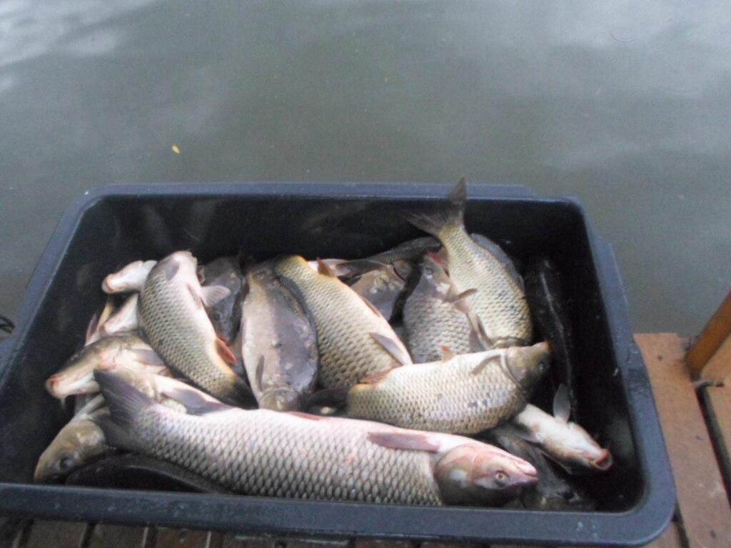Рыбалка без границ амур